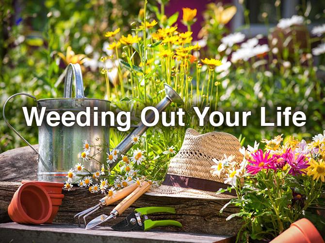 Weedingouryourlife